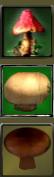 Mushroom-vert