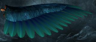 LI Parrot's Wing