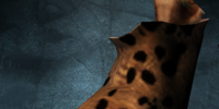 Jaguar Paw