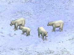 Furs (Arctic)