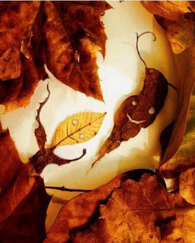 File:Leaves-JF.jpeg