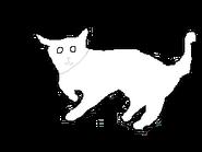 Male Long-hair cat