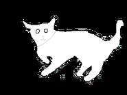 Female Shot-hair cat