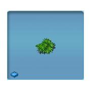 Luxury Bush 2