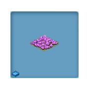 Gifts Violets
