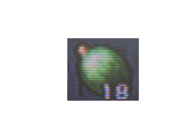 File:Sanchez Fruit.jpg