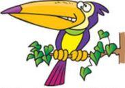 North Bird