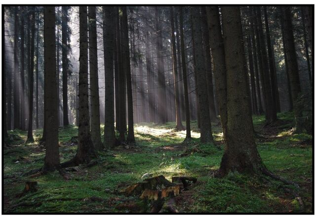 File:Dark forest by cooad.jpg