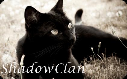 ShadowClan Banner