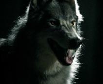Werewolf283px-WerewolfMason
