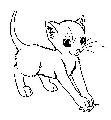 File:Medicine Cat Apprentice.png