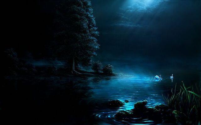File:Swan night by Fel X.jpg