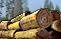 File:Logging.png