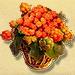 Basket of Cloudberries