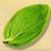 Goatweed Leaf