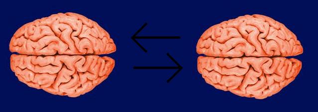 File:Sharing brainwaves.png