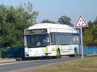 Bus vitalis (2)