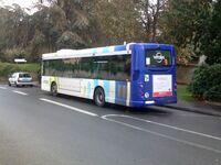 Bus vitalis (6)