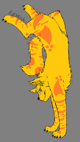 Y-Tiger doing a hand stand