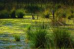 Elven Swampland