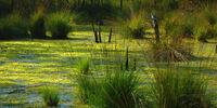 Elven Swamplands