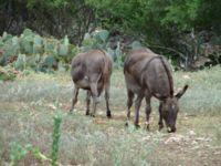 Donkeys Outside of Gleptori Forest