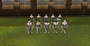 Formation IV