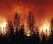 Lythel Great Fire2