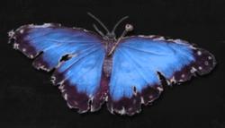 Jennifer'sButterfly