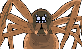 File:GIANT FRENETIC SPIDER.png