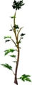 Mournberry bush.png