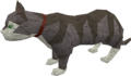 Overgrown cat (white and blue) pet.png
