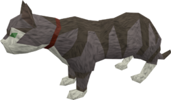 Overgrown cat (white and blue) pet