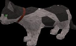 Pet cat (white and black) pet