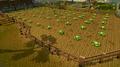 Falador cabbage patch.png