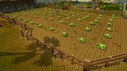 Falador cabbage patch