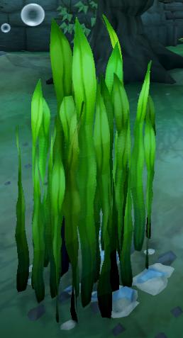 File:Seaweed (Beneath Cursed Tides).png
