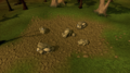 Draynor Mine.png
