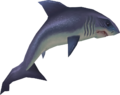 Raw great white shark detail.png