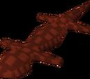 Red salamander