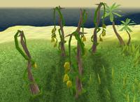 Vanilla plant