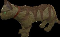 Pet cat (brown) pet