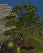 Man up tree