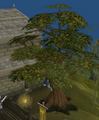 Man up tree.png