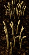 Barley3