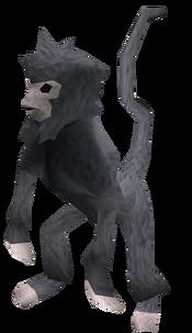 Monkey (blue and grey) pet