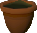 Yew seedling (w)