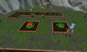Farming herbs