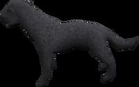 Labrador (black) pet