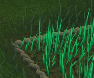 Snape grass6